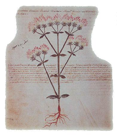 [Υλικά γραφής: Εικονογραφημένα χειρόγραφα.Ο περγαμηνός Διοσκουρίδης της Βιέννης, το πιο φημισμένο βυζαντινό χειρόγραφο. Φιλοτεχνήθηκε στην Κωνσταντινούπολη γύρω στο 512 για μια πριγίπισσα της Δύσης, την Juliana Anicia (Βιένη, Εθνική Αυστριακή Βιβλιοθήκη, cod. med. gr. 1).]
